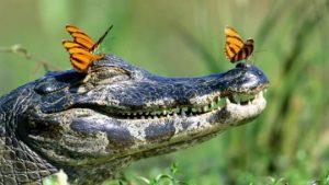 Reptilian Brain Rules Now